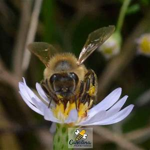 Make Bee Food for Bees