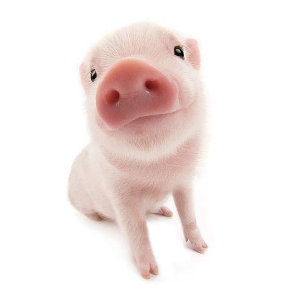 p-p-p-piglet