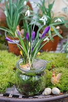 When Iris Ayes are blooming!