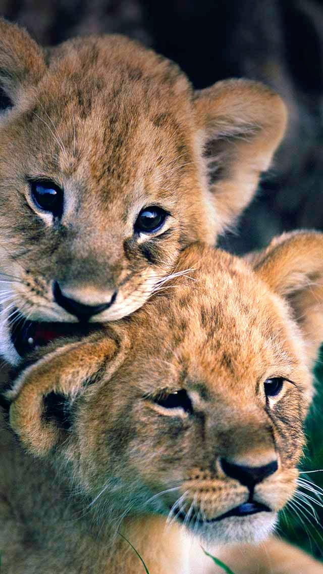 Creatures of love.