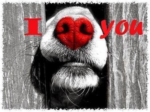 Pet Adoption this Valentine's Day.