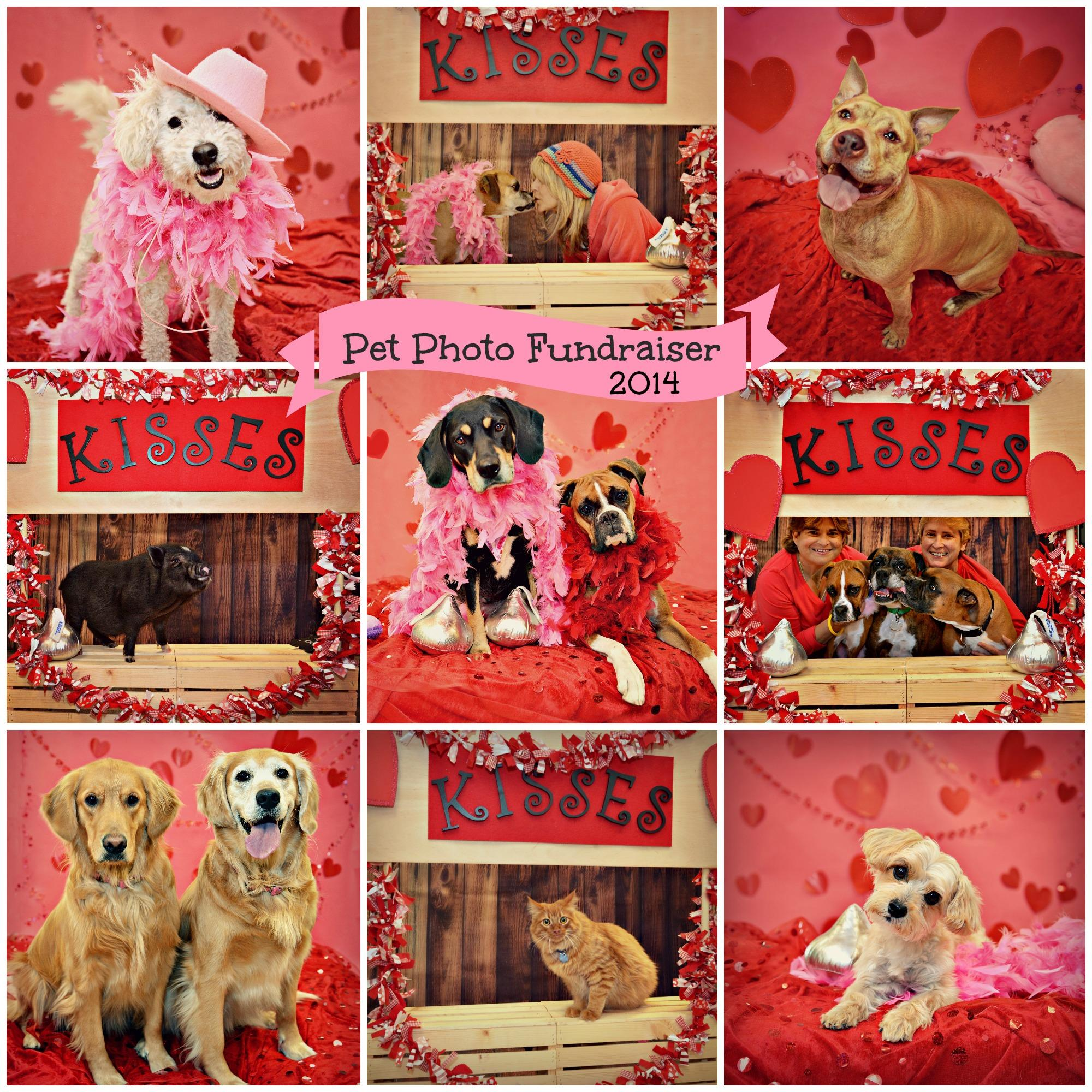 Valentine Pet Photos