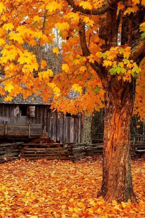 Country fall cabin