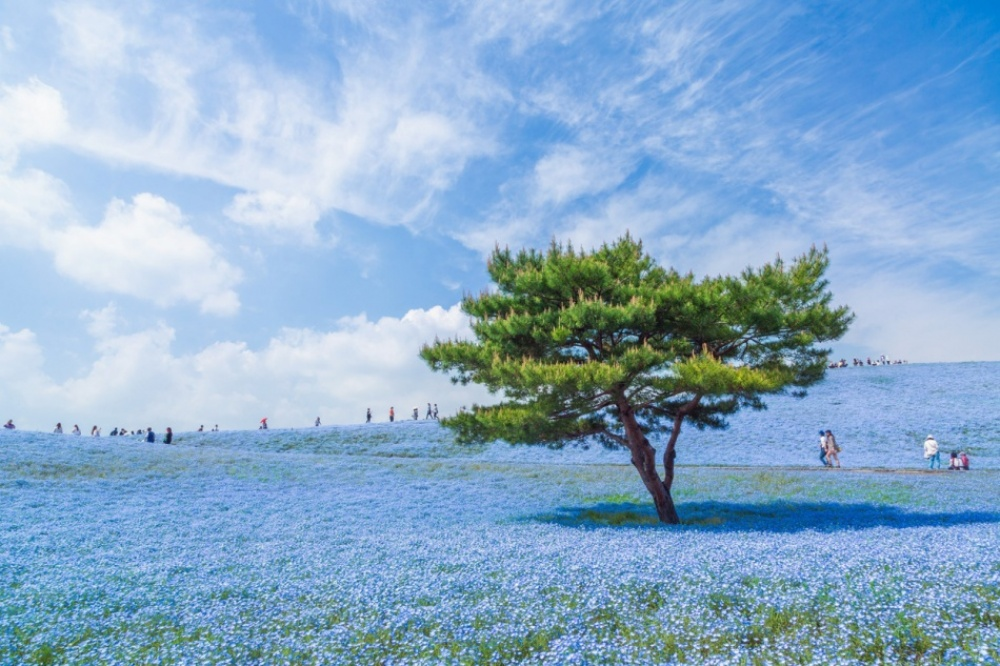 A blue universe in Japan