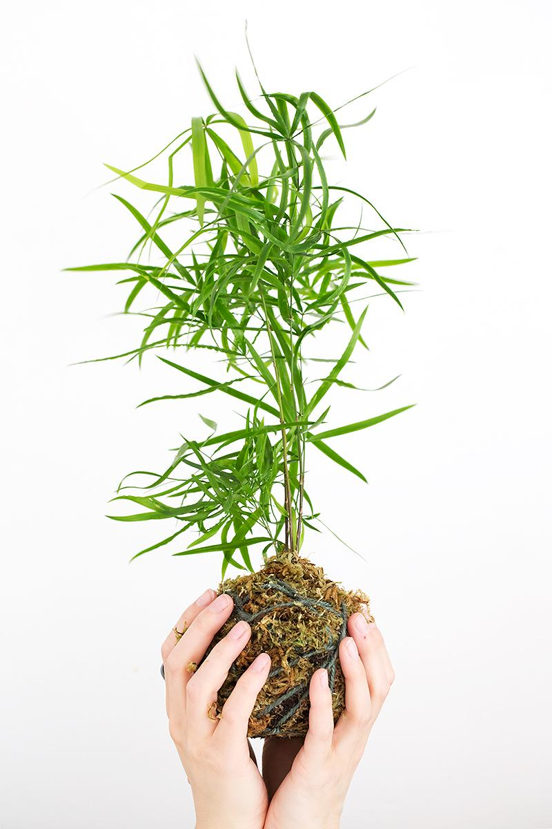 HOw to make a kokedama planter