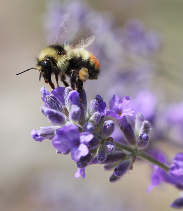 25 Plants For Bees In Your Garden