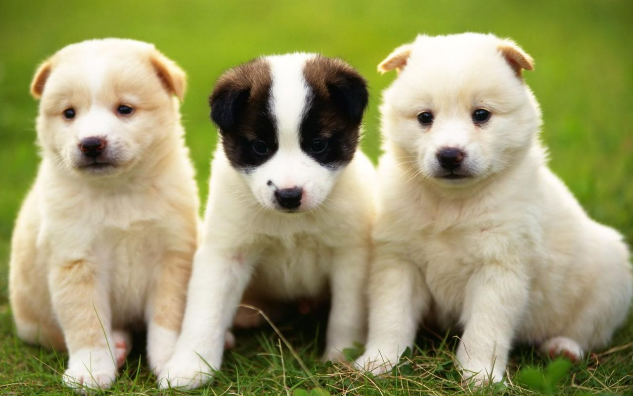 Very cute puppies