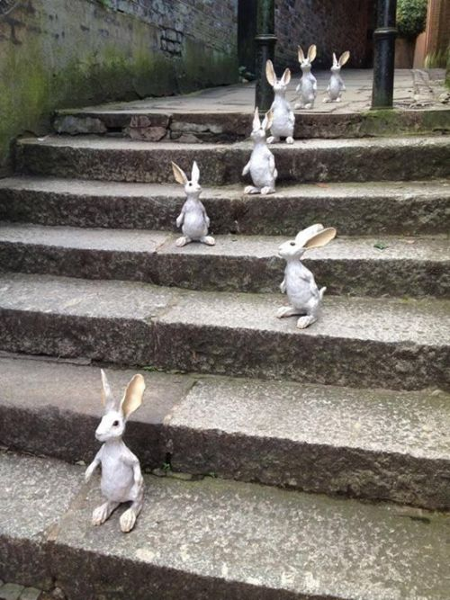 Bunnies on the stairway
