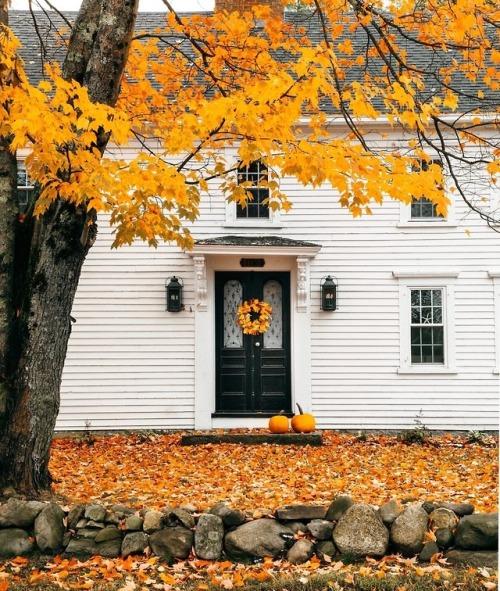Fall orange and white