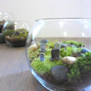 Graveyard Moss Terrarium