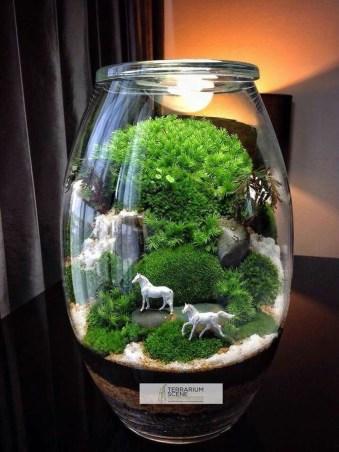 Bonsai Terrarium Jars