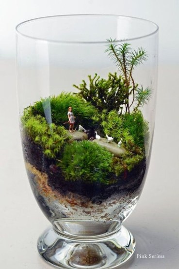 Bonsai Terrarium Jars