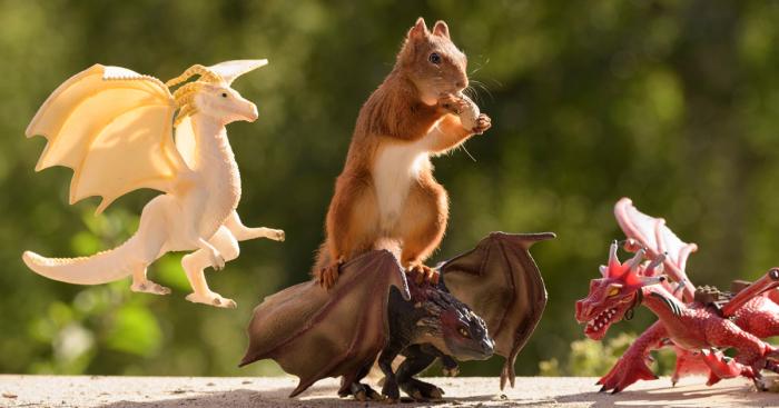 Squirrel Game of Thrones