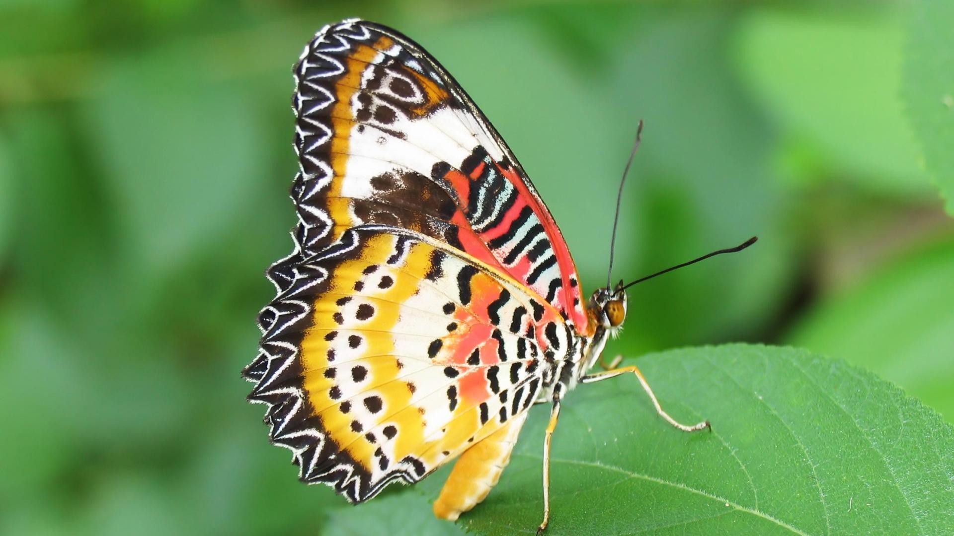 Inspiring Flowers with Butterfly