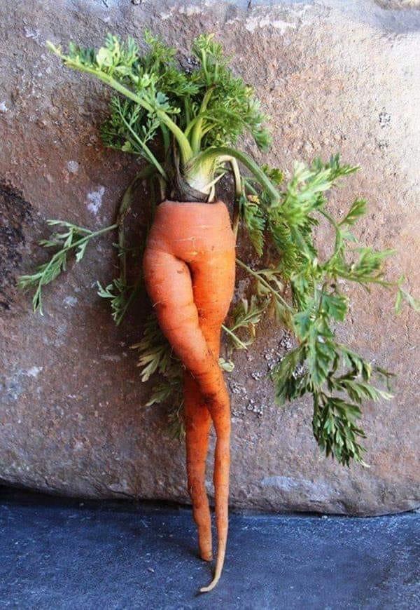 Hey carrot!