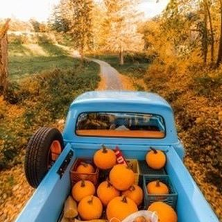 A truck full of pumpkins