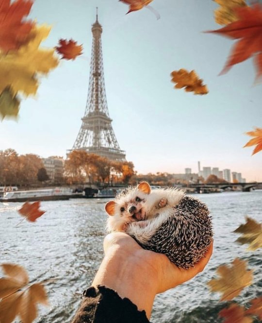 Happiness and a hedgehog
